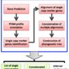 phylogenetic marker genesを検出し、marker genes全てを使って系統比較する自動化されたパイプライン ezTree