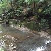 【アラ還さんぽ】これが世田谷?ブラタモリにも登場した等々力渓谷。