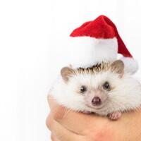 サンタはいないって気づいてからが人生の本番だよね!!