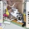 猫雑記 ~すずめの教育的指導~