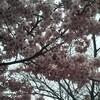 【ランニング】ニンニク注意と早咲きの桜