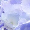 6月 ~紫陽花の季節~
