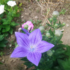 【人は土から離れては生きられない】庭いじりのススメ 週末は相場をわすれ、庭でもいじりましょう。