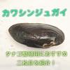 カワシンジュガイ タナゴ繁殖用におすすめの二枚貝を紹介!