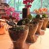 ガラス花器で楽しむインドアグリーン