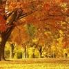秋だから聴きたい!哀愁たっぷりの曲5選