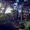 森の中で仕事