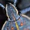 🐛📸昆虫のスーパーマクロ撮影❢