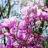 春のお散歩~たくさんの春のお花たち~
