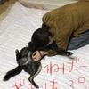 甲斐犬サンの洗濯日和〜翌日ハイツモ雨〜ショボーン━━(´・ω・`)━━。