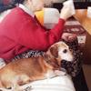 悲しくて怖いのは、本当は愛犬の方なんじゃないかな? ~老犬の介護を通して感じる事~