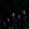 【54-1】『葡萄 と 郷愁』     宮 本  輝 著