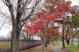 【行ったつもりシリーズ】東京と埼玉の県境を自転車で走る 大泉学園から西武園まで