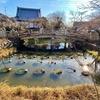 兜之池(蓮池)(京都府京都)