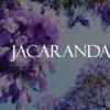 【絶景】 南半球の桜ジャカランダ!紫色に染まるジンバブエの街が美しすぎる!