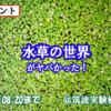 【8/20まで!】こんな水草見たことねぇ!!植物園で大人気イベントの水草展に水草の変態とログインしてきた!【水草展】