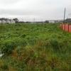 鹿島建設用地の草刈り