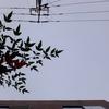 作曲工房 朝の天気 2018-12-07(金)くもり