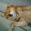 山の神にいた犬(4)