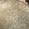 頭皮の皮下細胞をこわすようなマッサージはダメです。ヘアサロン現場からの育毛論