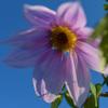 TAMRON SP 35mm で馬見丘陵公園の花、前編
