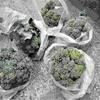 梅雨入り時期に始まる野菜の収穫