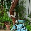 チョモの木登り