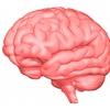 【水素セラピスト検定】ヘルスケア編 『神経系と脳の働き Part.5』