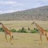 世界一周104日目前編 ケニア(38) マサイマラ国立公園1日目 〜人生初のサファリは動物の聖地・マサイマラで〜