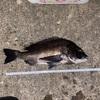 8月29日 神の島 真鯛釣行予定😅