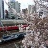 桜満開の時期になりました🌸