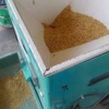 種籾にヒゲや芒や枝梗を脱ぼう機で取り除きました。明日種まきです♪