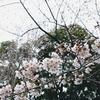 黒鯛と釣りの黒メバル(小田原産)