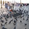 トリニスタのイタリア紀行②〜イタリアの鳩は図々しい!〜