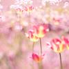浮かぶ花たち:ティルトマウントの撮影例(1)