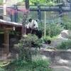 混雑する週末でも上野動物園で楽々パンダを見るぞ! 駐車場を含めた完全攻略!