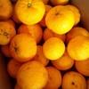柚子の季節になりました。