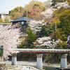 地元の桜めぐり Part2 (4月4日編) Ⅹ