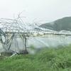 【激甚災害】台風24号の農業関連の被害を『激甚災害』に指定!台風19号・20号・21号の被害も『局地激甚災害』に!指定されるとどうなるの?