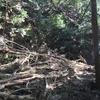 和知の林道へ  台風21号の後初めて編