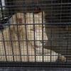 沖縄こどもの国 ホワイトライオン