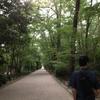 夏の下鴨神社はとにかく最高、すきすきだいすきちょうあいしてる