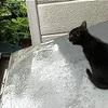 子猫が屋根から下りられないので、エサと水をやって1週間!?