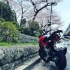 都内でお花見ツーリングするなら隅田公園をおすすめしたい!