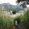 富士山こどもの国で、ススキの迷路に迷う☆(富士市)~Mt.Fuji Children's World~A maze made of pampas glass