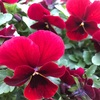 花粉症のツボとイルミネーション