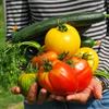 家庭菜園感覚の広告収入な話。