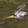 野川の川べりを,野鳥の写真を撮りながら歩いてきた・その1(小鳥編)【東京バードウォッチング】