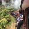 ダンデノン丘陵観光!蒸気機関車パッフィンビリーに乗ってオリンダとササフラスへ!