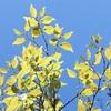 【おとなの自然観察 5つの手順(初心者 後編)】自然に触れて、自然を楽しむための手順をご紹介